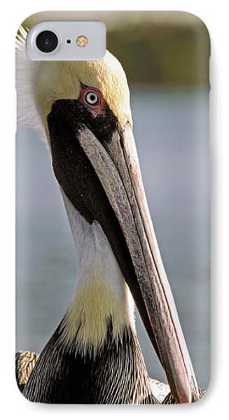Pelican Portrait IPhone Case by Sally Weigand