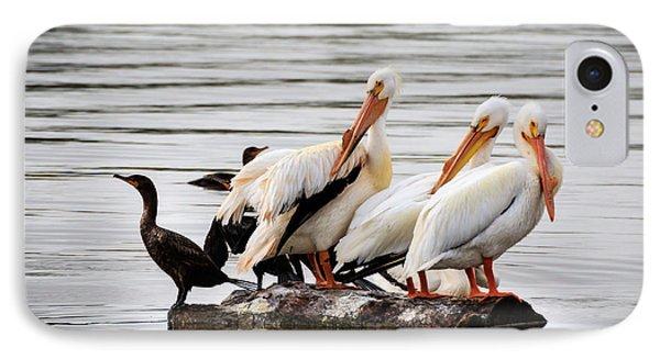 Pelicans And Cormorants IPhone Case