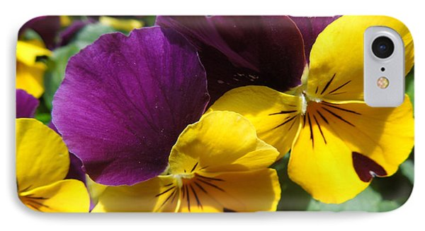 Pella Pansies IPhone Case by Peg Toliver