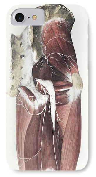 Pelvic Spinal Nerves Phone Case by Sheila Terry