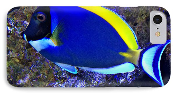Blue Tang Fish  IPhone Case