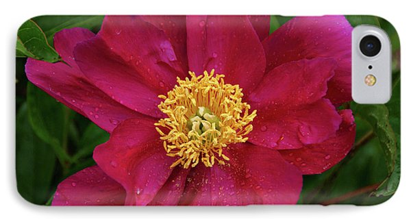IPhone Case featuring the photograph Peony In Rain by Sandy Keeton