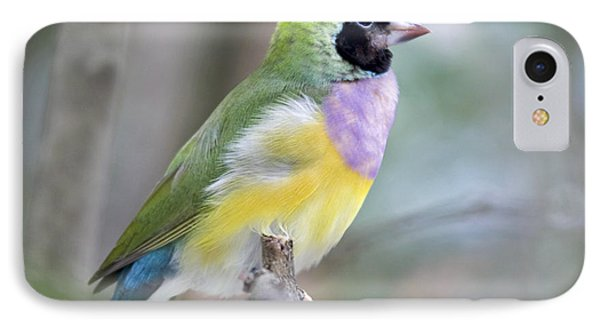 Perched Gouldian Finch Phone Case by Glennis Siverson