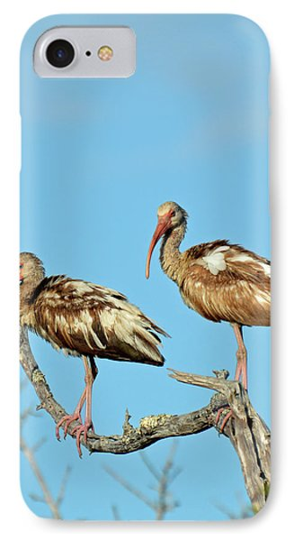 Perched White Ibises IPhone Case by Bruce Gourley