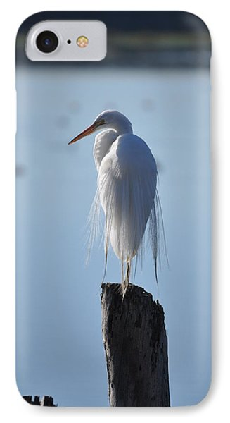 Perching Egret IPhone Case