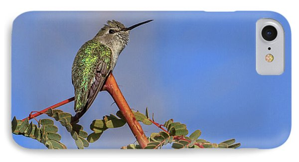 Perching Hummer IPhone Case by Robert Bales