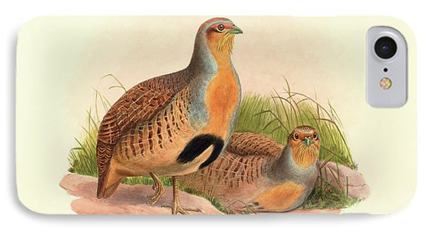 Perdix Barbata, Daurian Partridge IPhone Case by John Gould