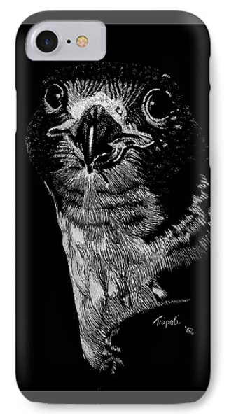 Peregrin Falcon IPhone Case by Lawrence Tripoli