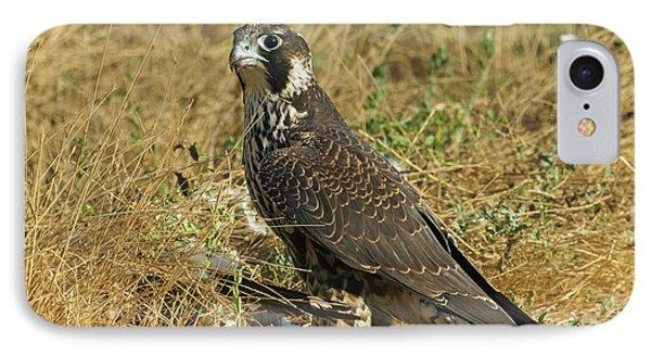 Peregrine Falcon Phone Case by Doug Herr