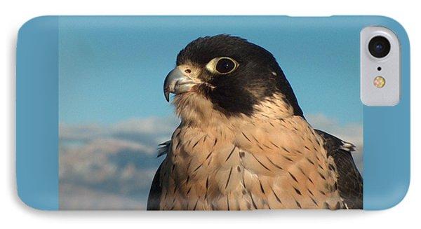 Peregrine Falcon Phone Case by Tim McCarthy