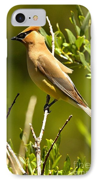 Cedar Waxing iPhone 7 Case - Perfectly Perched by Adam Jewell