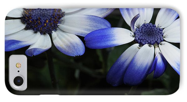 Pericallis From Out Of The Shadows IPhone Case by Dorothy Lee