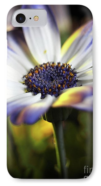 Pericallis Kissed By Golden Light IPhone Case by Dorothy Lee