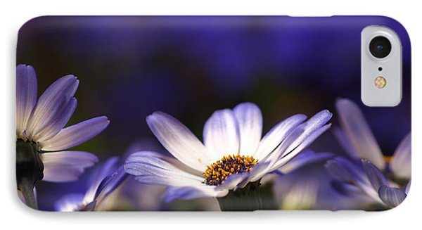 Pericallis On A Cool Spring Evening 4 IPhone Case by Dorothy Lee