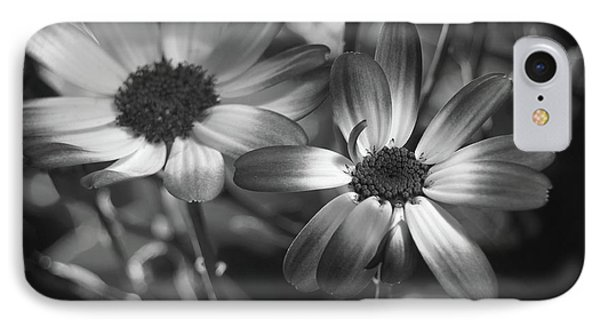 Pericallis Senetti Blue Bicolor In Monochrome 2 IPhone Case by Dorothy Lee