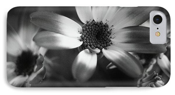 Pericallis Senetti Blue Bicolor In Monochrome 3 IPhone Case by Dorothy Lee