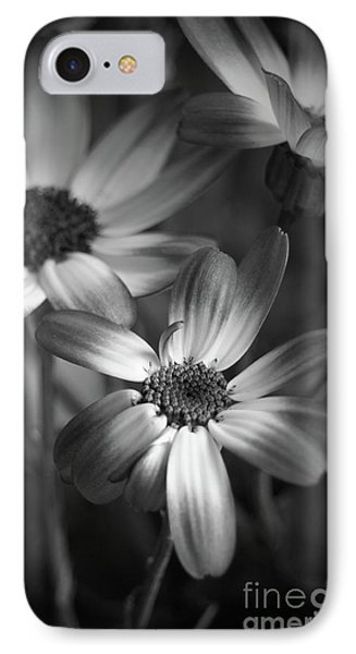 Pericallis Senetti Blue Bicolor In Monochrome IPhone Case by Dorothy Lee