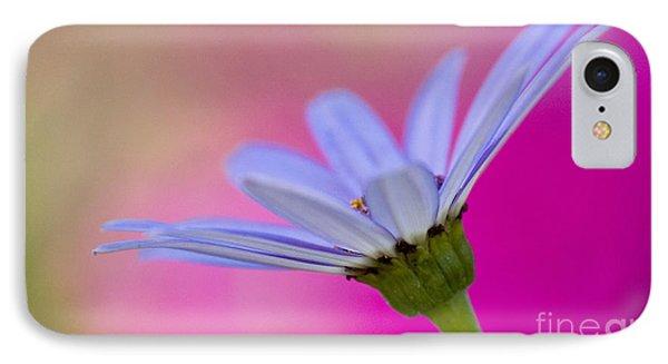 Pericallis Senetti Closeup IPhone Case by Dorothy Lee