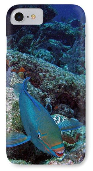 Perky Parrotfish Phone Case by Kimberly Mohlenhoff
