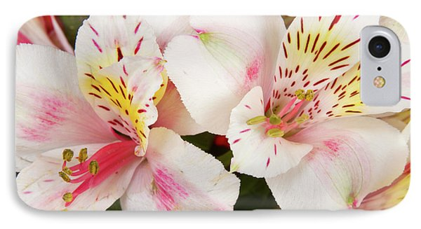 Peruvian Lilies  Flowers White And Pink Color Print Phone Case by James BO  Insogna