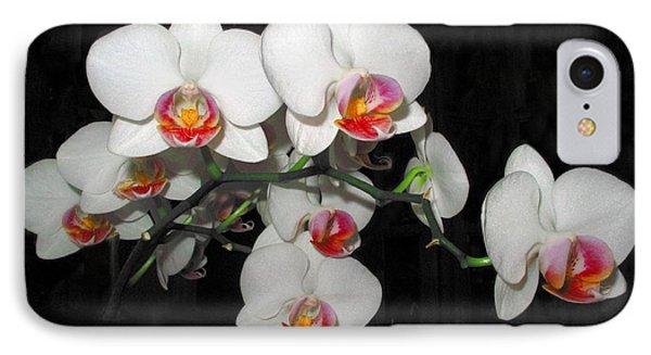 Phalaenopsis Orchids IPhone Case