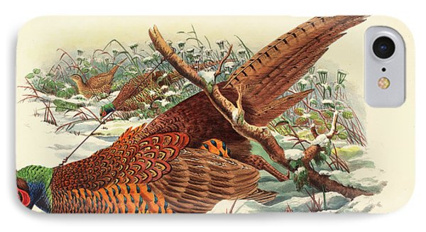 Phasianus Colchicus, Ring Necked Pheasant IPhone Case by John Gould