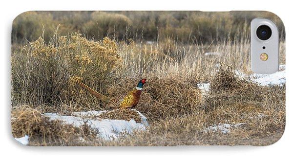 Pheasant Glory IPhone Case