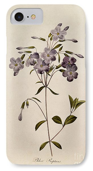 Phlox Reptans IPhone Case