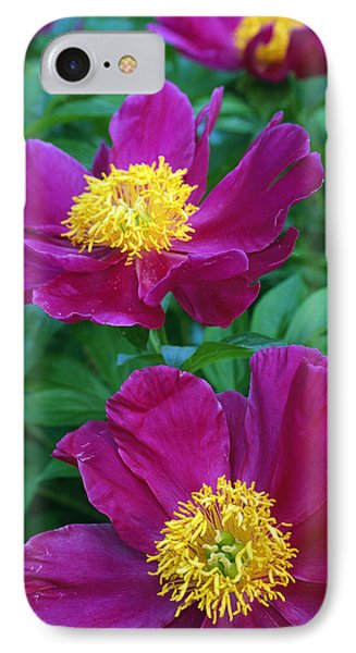 Pianese Flowers IPhone Case by Natural Selection Tony Sweet