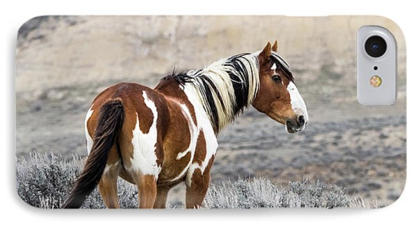 Picasso - Wild Mustang Stallion Of Sand Wash Basin IPhone Case