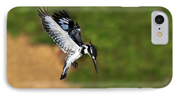 Pied Kingfisher Phone Case by Tony Beck