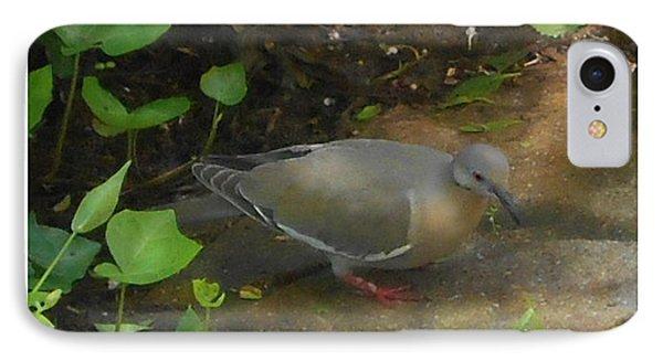 Pigeon IPhone Case by Felipe Adan Lerma