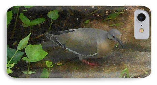 Pigeon Poster IPhone Case by Felipe Adan Lerma