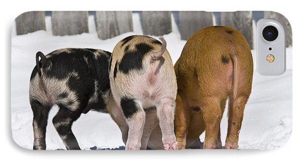 Piglets From Behind IPhone Case by Jean-Louis Klein & Marie-Luce Hubert