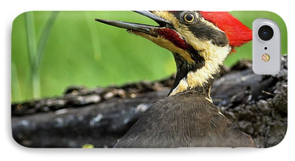 IPhone Case featuring the photograph Pileated by Douglas Stucky