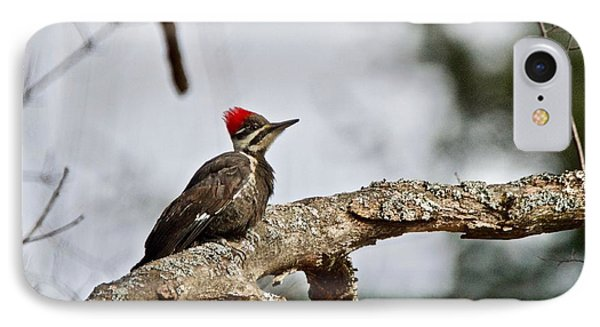 IPhone Case featuring the photograph pileated Woodpecker 1068  by Michael Peychich