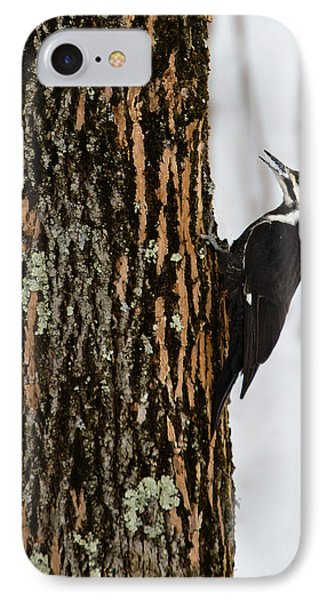 Pileated Woodpecker IPhone Case by Skip Tribby