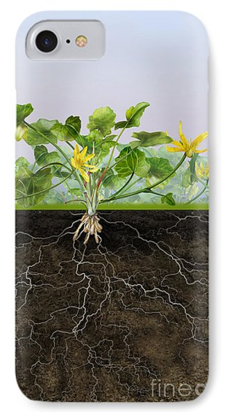 Pilewort Or Lesser Celandine Ranunculus Ficaria - Root System -  IPhone Case by Urft Valley Art