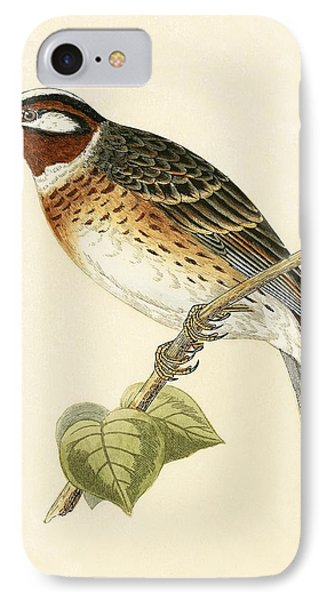 Pine Bunting IPhone Case by English School