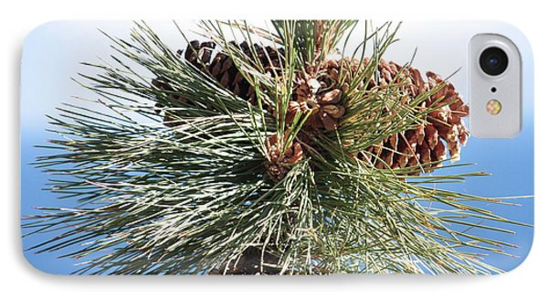 Pine Cones Over Lake Tahoe Phone Case by Carol Groenen
