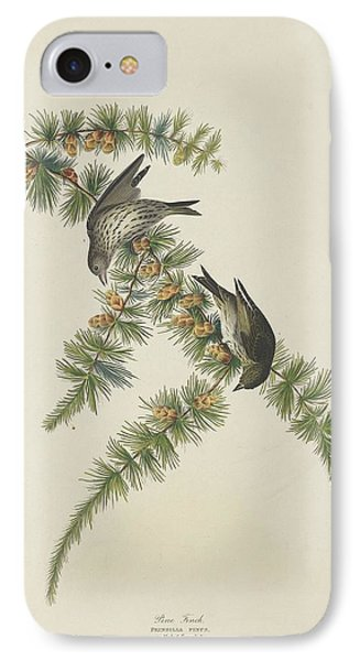 Pine Finch IPhone Case by Rob Dreyer
