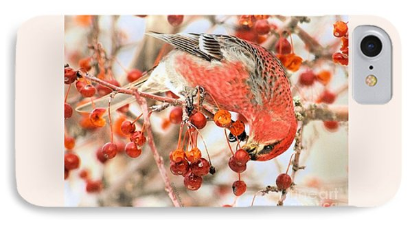 Pine Grosbeak IPhone Case by Debbie Stahre