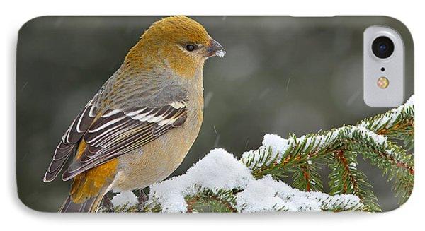 Pine Grosbeak-female In The Winter Storm IPhone Case