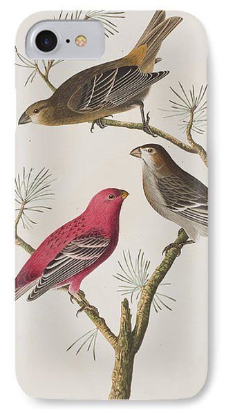 Pine Grosbeak IPhone Case by John James Audubon