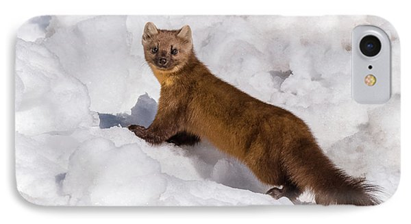 Pine Marten In Snow IPhone Case by Yeates Photography