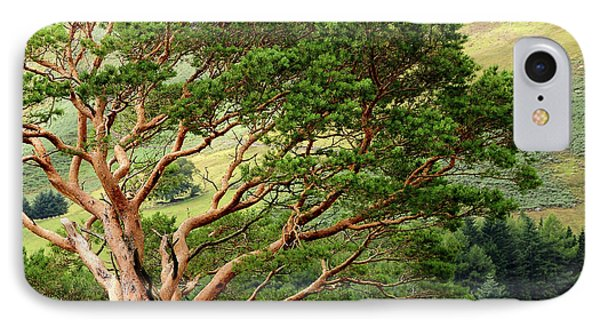 Pine Tree At Wicklow Mountains. Ireland IPhone Case