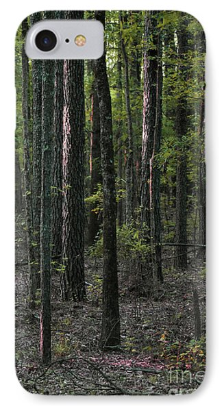 IPhone Case featuring the photograph Pine Wood Sunrise by Skip Willits