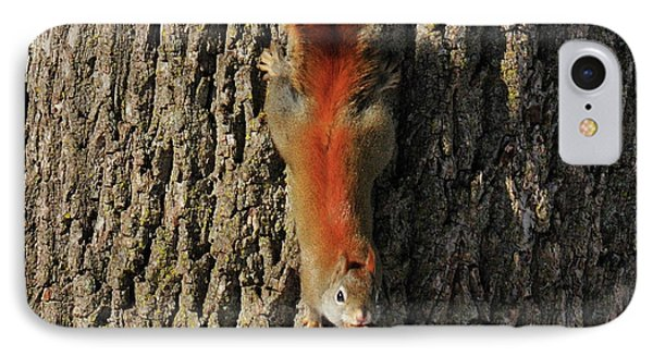 Piney Squirrel Phone Case by David Arment