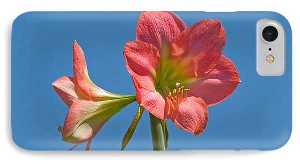 Pink Amaryllis Flowering In Spring Phone Case by Allan  Hughes