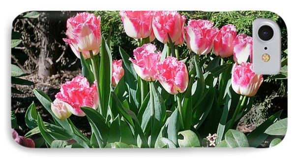Pink And White Fringed Tulips Phone Case by Louise Heusinkveld